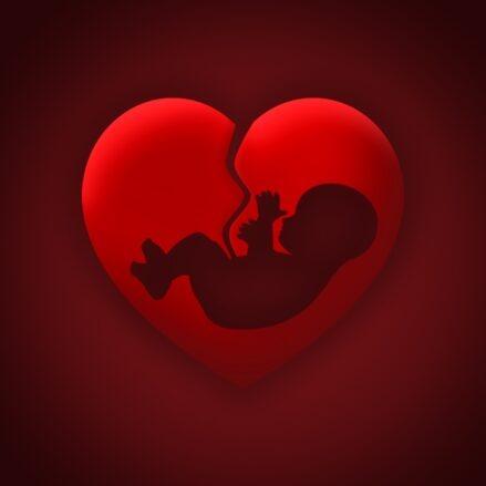 baby, heart, womb